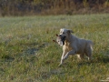 Chasse-chien-1