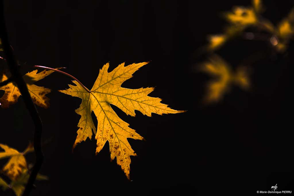Feuille-automne_1