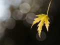 Feuille-automne-flare
