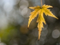 Feuille-automne_2