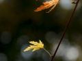 Feuilles-automne_2