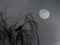 Pleine-lune-et-corneille