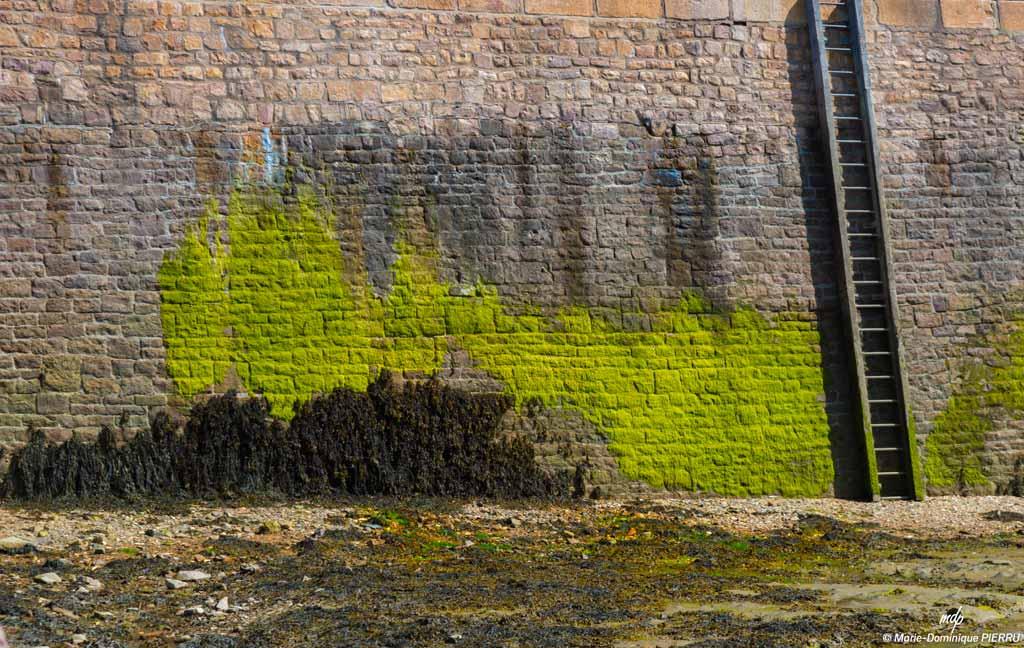 Erquy-port-mur