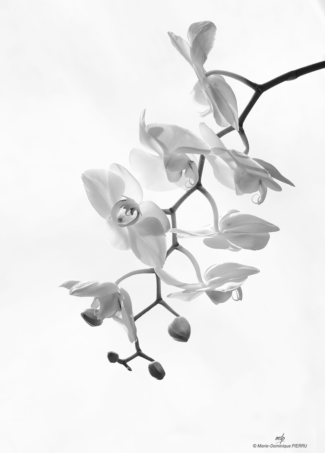 Orchidee-NB-2