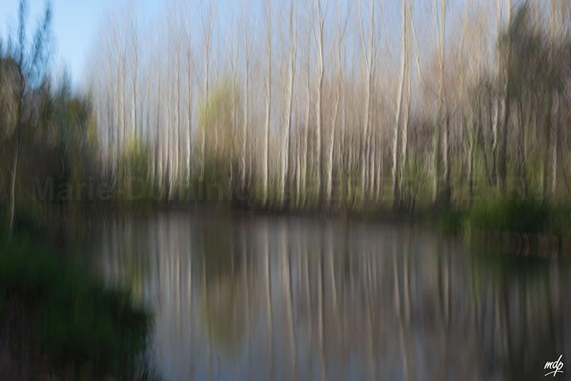reflets-arbres3