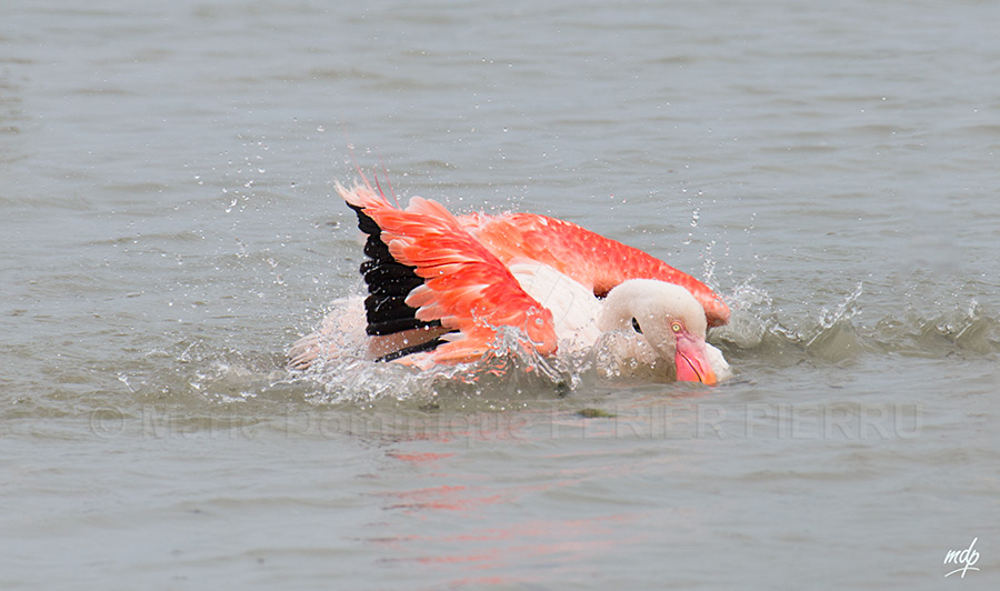 flamant-rose-bain