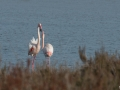 Flamants-roses-161224-1