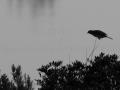 contre-jour-oiseau-en-vol_161222