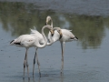 flamants-roses-trio-2