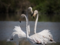 flamants-roses-trio