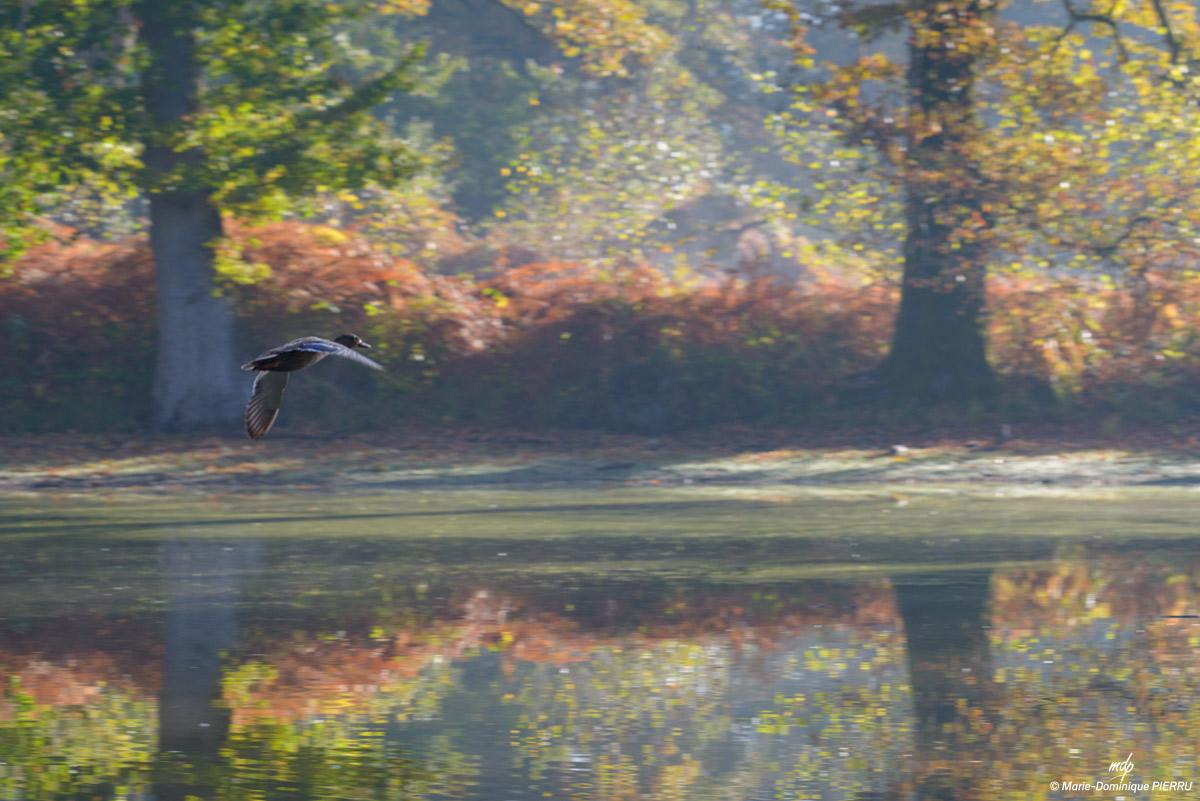 Etang-canard-automne