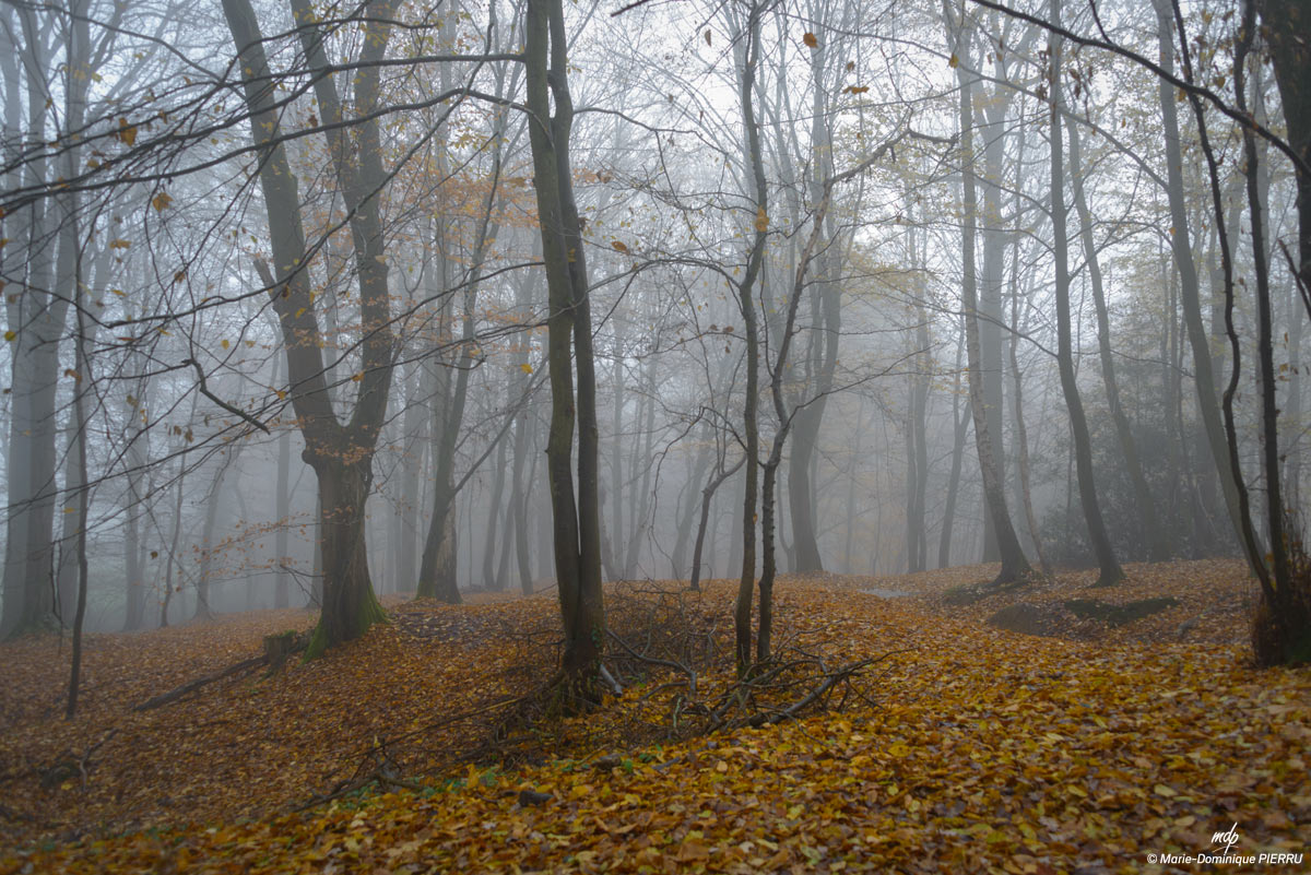 Sous-bois_brouillard-Picardie-1