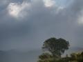 Arbre-orage-2